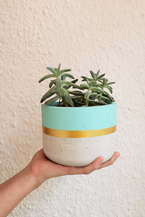 Maceta con planta