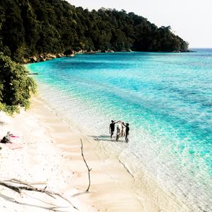 Surin Islands, Skylark Style