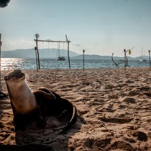 Naka Noi: Lockdown on Otter Island