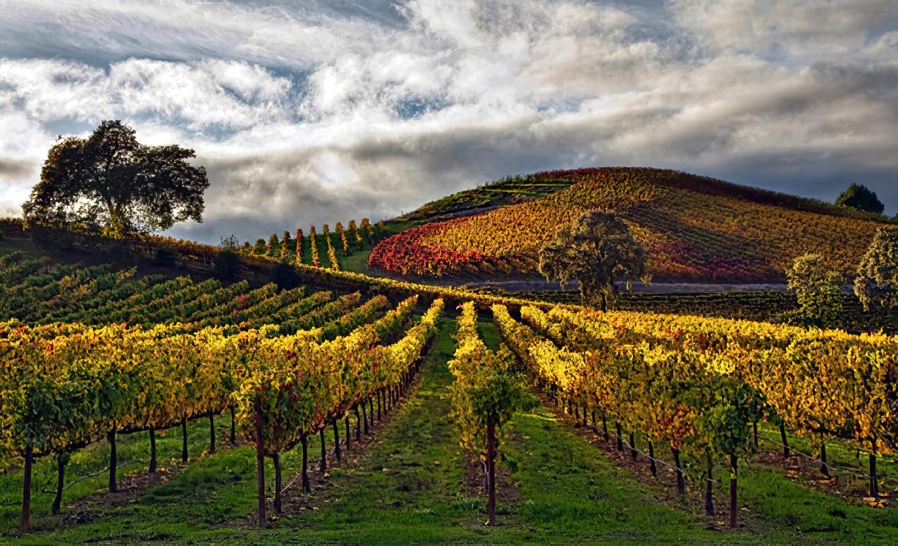 Autumn; Sonoma County,CA
