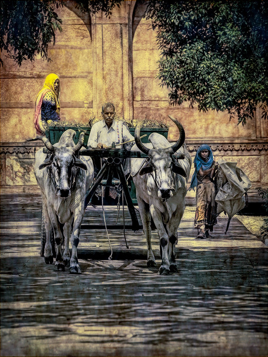 Oxen cart and Workers caring for the grounds of the Taj Majal, India