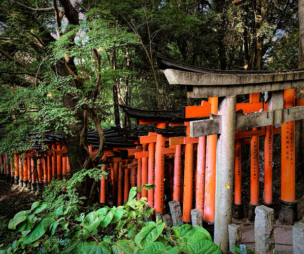 Torii Gates Meandering Into the forests of Mt. Inari