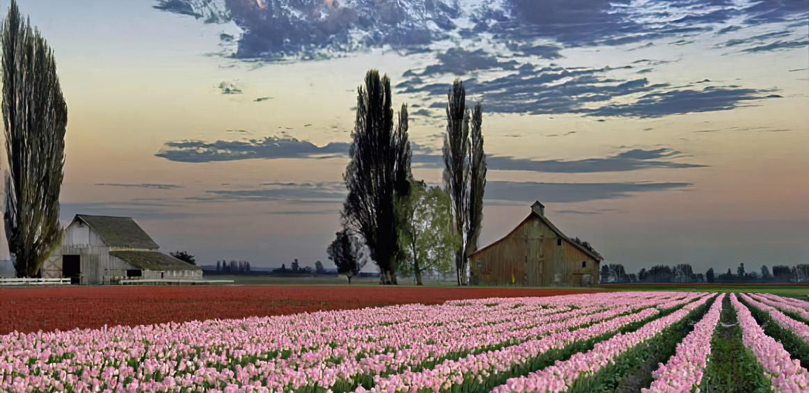 Skagit Valley in April; Washington state