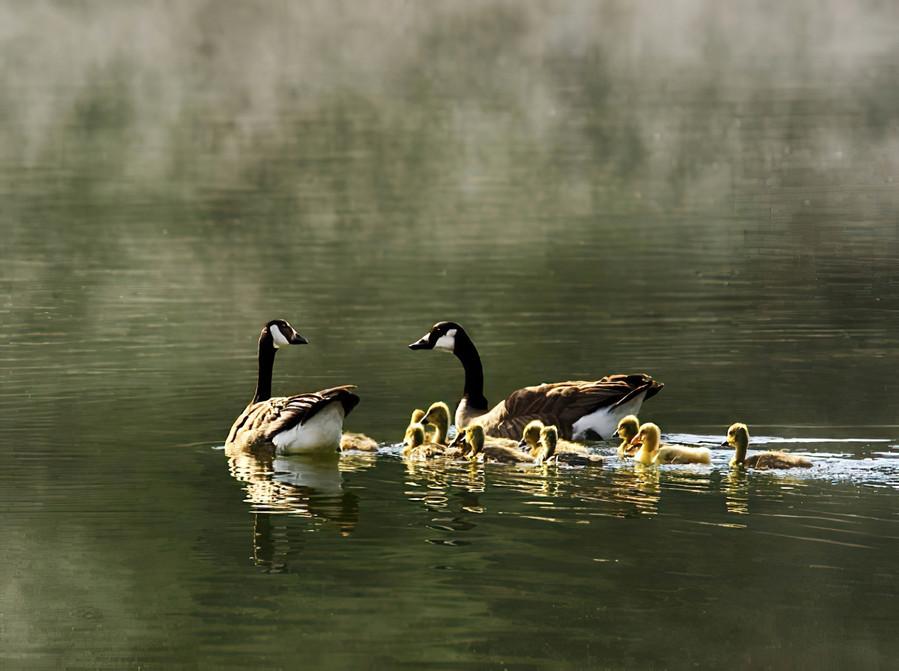 Foggy Morning on Spring Lake; Sonoma County
