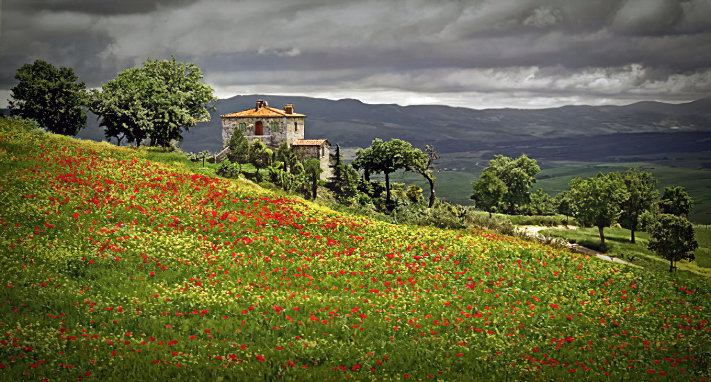 Tuscan Spring; Mustard fields and le coquelicot (red poppies)