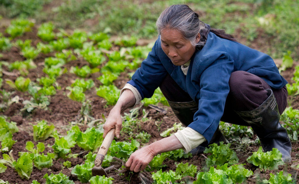 Tending the Greens;Yangshuo-China