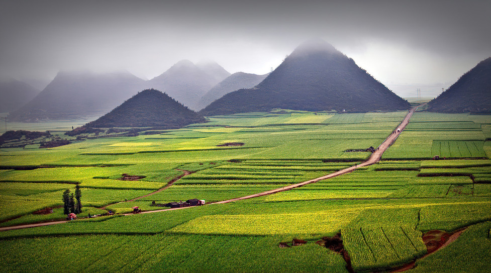 Canola Fields in the Spring; Luoping,China
