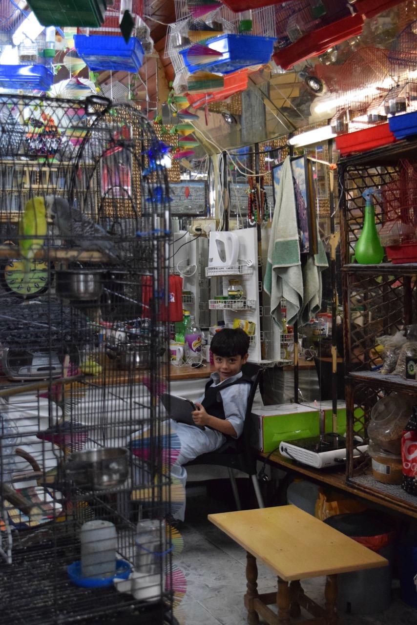 Le petit vendeur d'oiseaux
