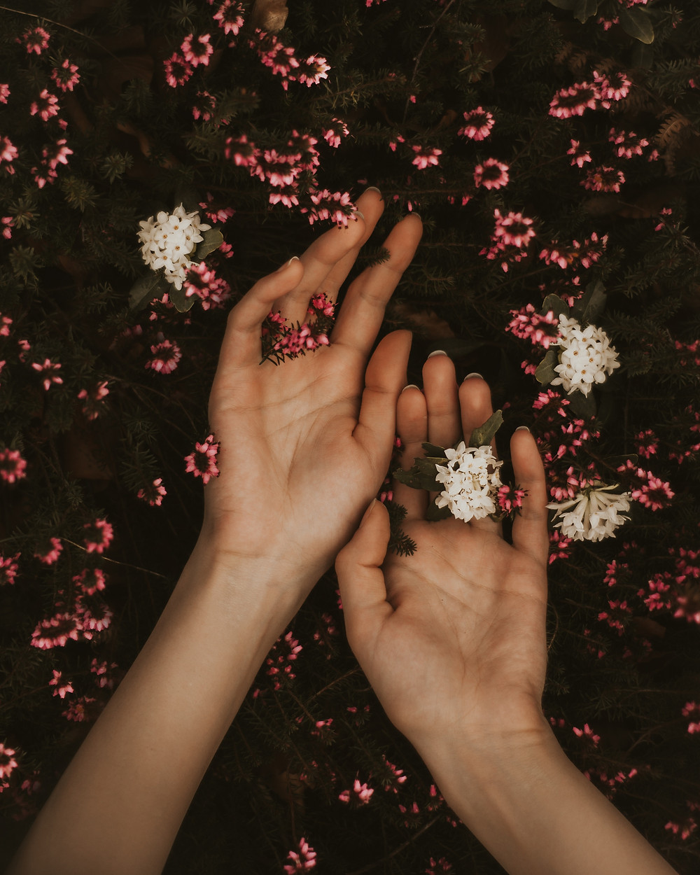 Hands surrounded by oink and white flowers