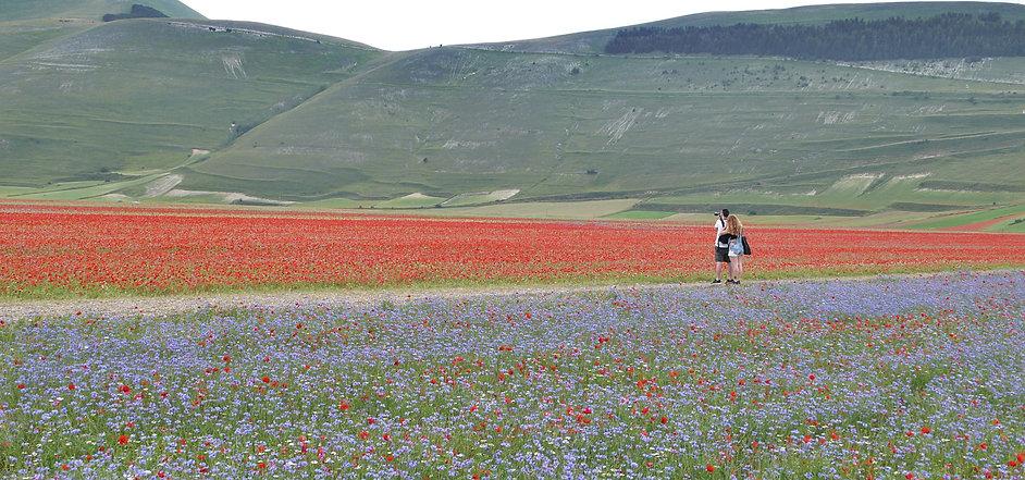 Castelluccio di Norcia romantic.jpg