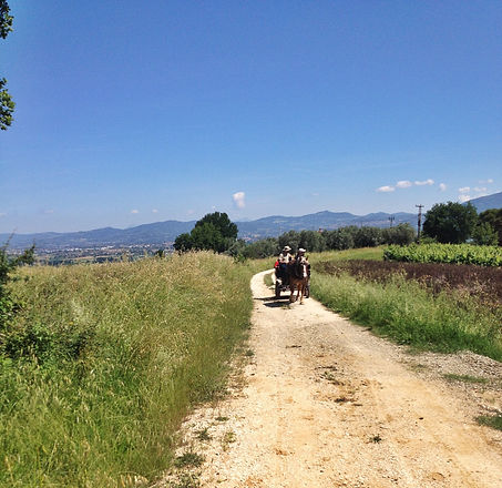 Umbria itinerary wine tour by horse.jpg