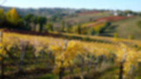 wineyard Montefalco.jpg