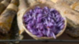 saffron tour umbria flowers.jpg