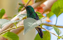 Website hummingbird my services 2.jpg