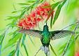 Website hummingbird about me 2.jpg