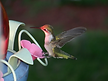 Website hummingbird my services 1.bmp