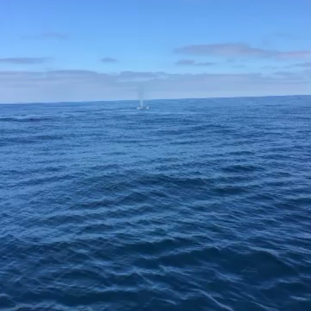 A Blue Whale in the Distance