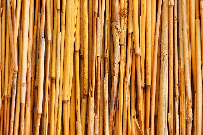 bamboo_texture1601_edited.jpg