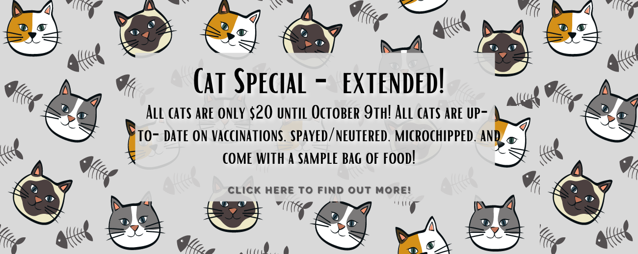 Banner Cat special.png