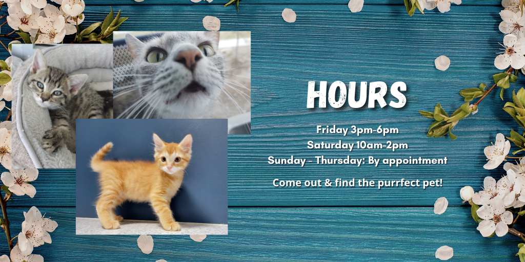 HOURS! New.png
