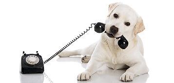 aspca hotline dog.jpg