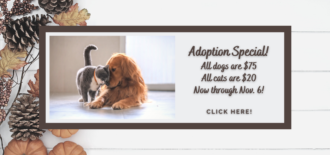 Adoption Special (1).png