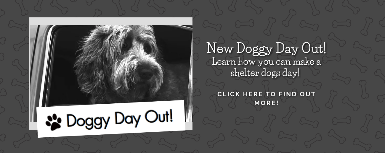 Doggy Day Out (1).png