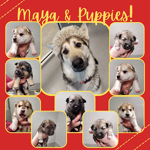 Maya & Puppies!.png