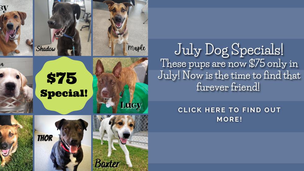 Banner July Dog Specials.png