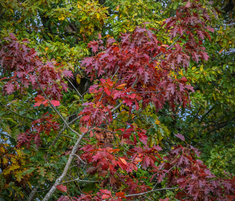 Autumn Colours01