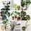 Thumbnail: Plant Mom