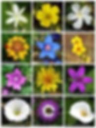 Fleurs de Bach.jpg