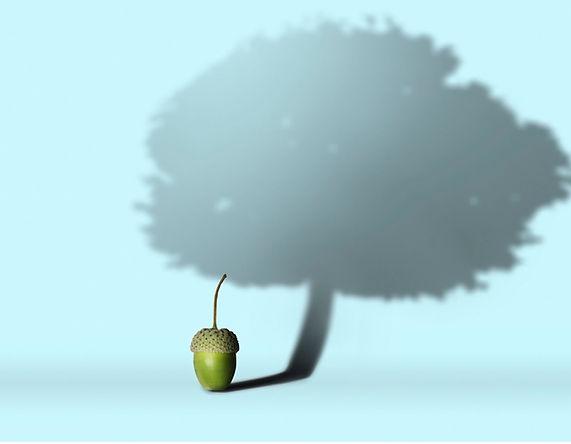 Acorn to Oak design.jpg