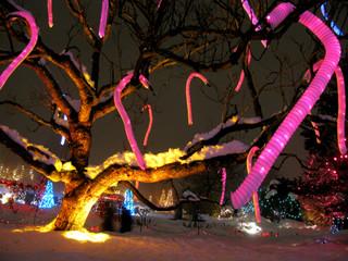 Christmas Lights by Travel Photographer Doug Matthews