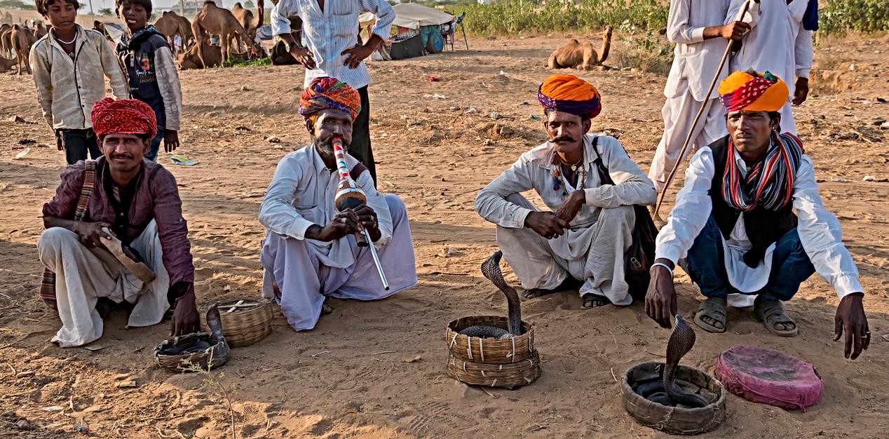 Snake charmers at Pushkar Fair, India