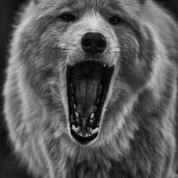 Roaring Timberwolf