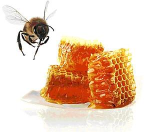 Miel ruche.jpg