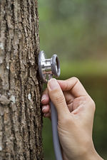 woman hand listens to a tree with a stet