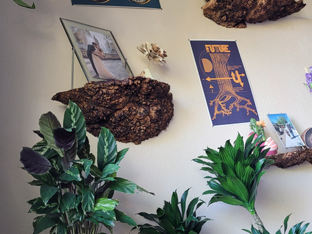 Burl Cap Live Edge Float Shelves + House Plants, All the Natural World Vibes
