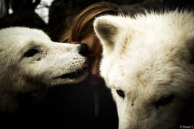 Yam_Wolves_Fauna1_FB-34.jpg