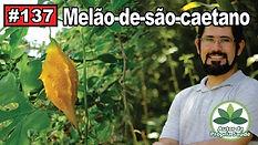 Melão-de-São-Caetano