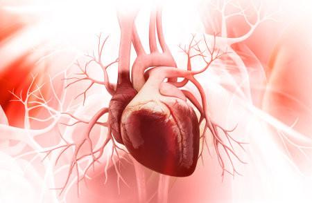 Gengibre e o coração: Dois extremos em um tratamento!