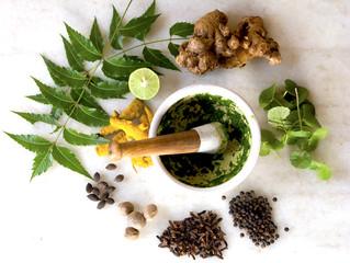 Doenças Respiratórias: Conheça as plantas medicinais que podem ajudar no tratamento