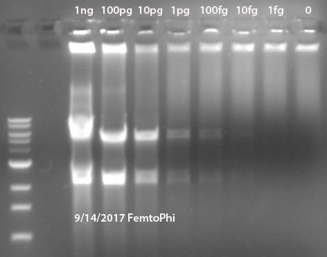 FemtoPhi RCA Premix with Specific Primers (Cat#: FM100S)