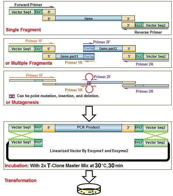 TClone Figure.jpg