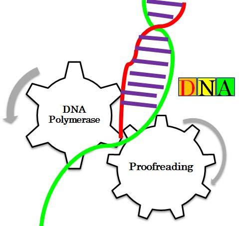 U-HiFi DNA Polymerase (1000 Unit, Cat#: P1000)