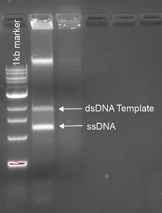 C2TA ssDNA20190424.jpg