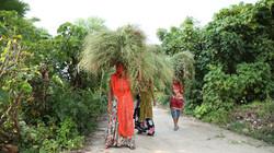 Veiled Women Bearing Burdens