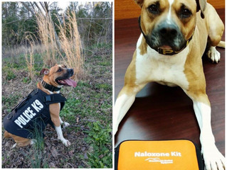 K-9 Sheeva Receives Protection