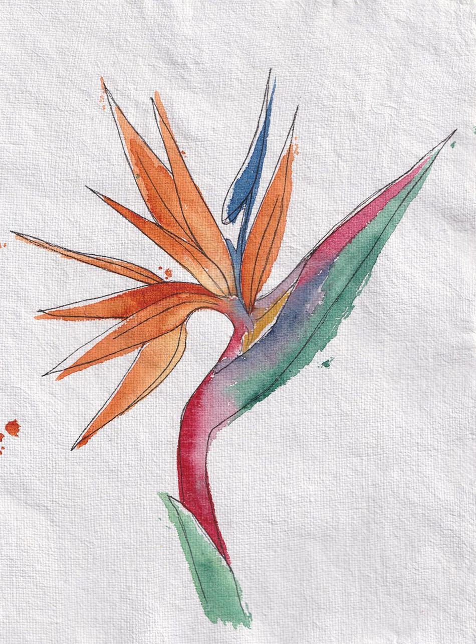 Strelitzia Reginae, dit Oiseau du Paradis
